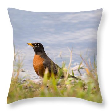 Robin Viewing Surroundings Throw Pillow