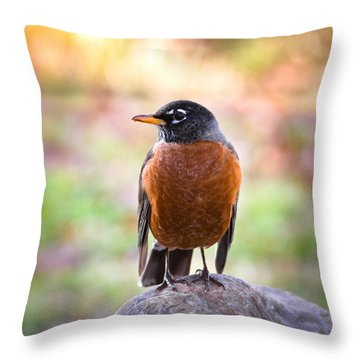 Rock-n-robin Throw Pillow