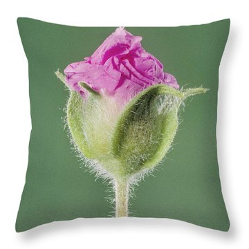 Rockrose Flowerbud Throw Pillow by Claude Nuridsany and Marie Perennou