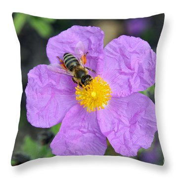 Throw Pillow featuring the photograph Rockrose Flower With Bee by George Atsametakis