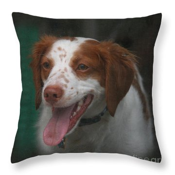 Rooney At The Back Door Throw Pillow
