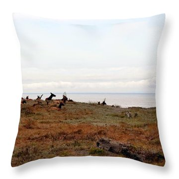 Roosevelt Elk And The Ocean Throw Pillow