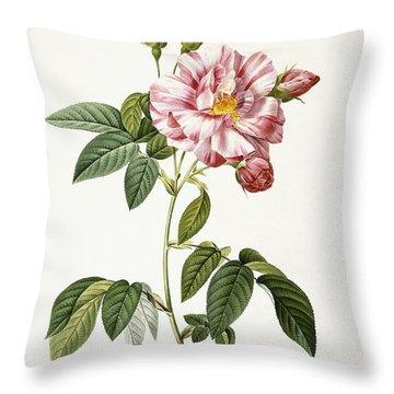 Rosa Gallica Versicolor Throw Pillow by Pierre Joseph Redoute