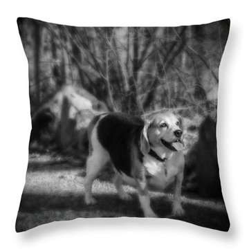 Roscoe Throw Pillow