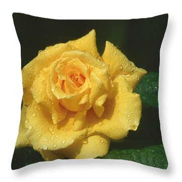 Rose 1 Throw Pillow by Andy Shomock