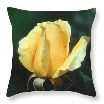 Rose 2 Throw Pillow by Andy Shomock