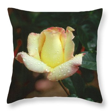 Rose 3 Throw Pillow by Andy Shomock