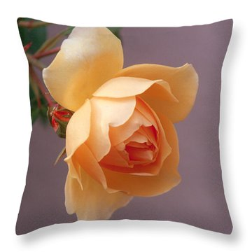 Rose 4 Throw Pillow by Andy Shomock
