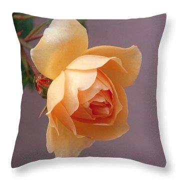Rose 4 Throw Pillow
