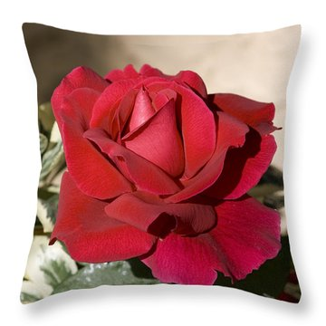 Rose 5 Throw Pillow by Andy Shomock