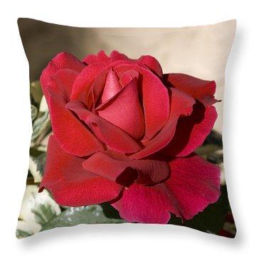 Rose 5 Throw Pillow