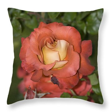 Rose 6 Throw Pillow by Andy Shomock
