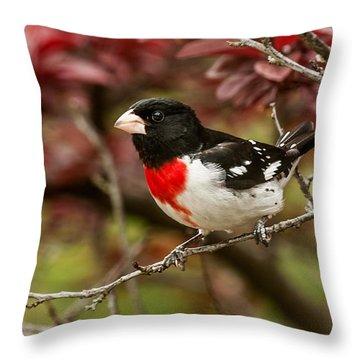 Rose- Breasted Grosbeak 1 Throw Pillow