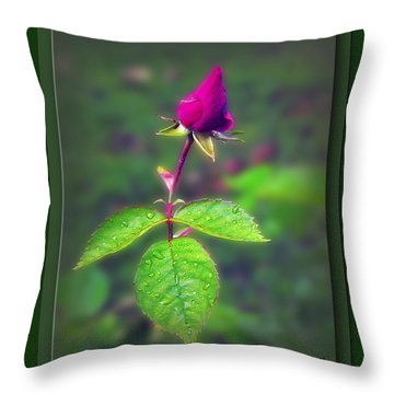 Rose Bud Throw Pillow by Brian Wallace