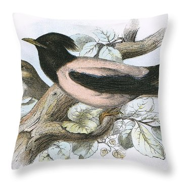Rose Coloured Starling Throw Pillow by English School