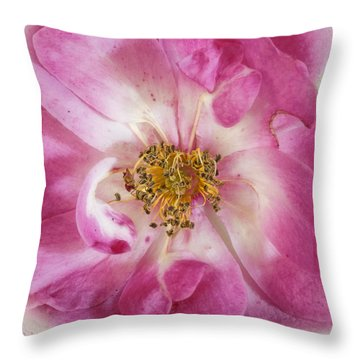 Throw Pillow featuring the photograph Rose by Elaine Teague