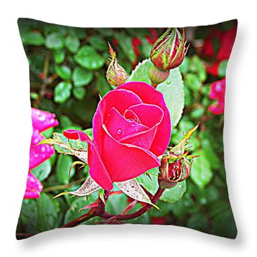 Rose Garden Centerpiece 2 Throw Pillow by Pamela Hyde Wilson