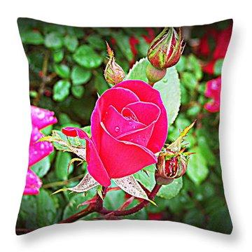 Rose Garden Centerpiece 2 Throw Pillow