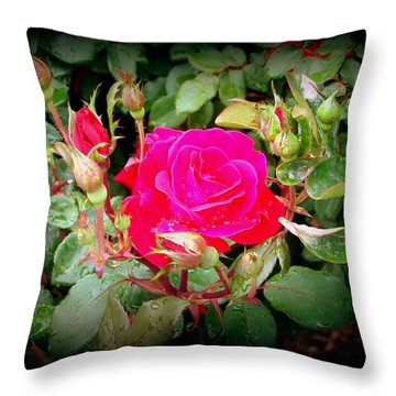 Rose Garden Centerpiece Throw Pillow by Pamela Hyde Wilson