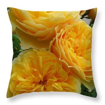 Throw Pillow featuring the photograph Rose Graham Thomas by Sabine Edrissi