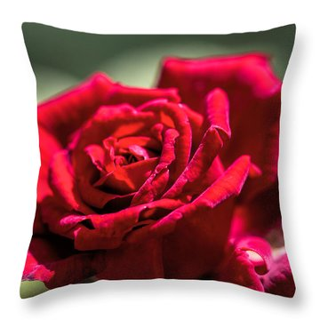 Throw Pillow featuring the photograph Rose by Leif Sohlman