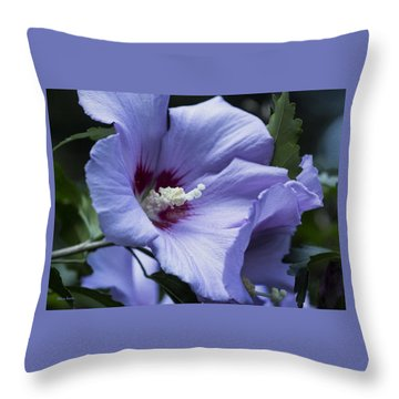 Rose Of Sharon Throw Pillow by Rebecca Samler