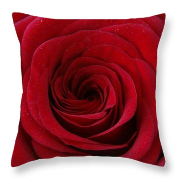 Throw Pillow featuring the photograph Rose Red by Shawn Marlow