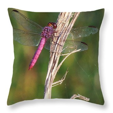 Roseate Skimmer 000 Throw Pillow
