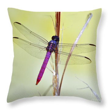 Roseate Skimmer Dragonfly Throw Pillow