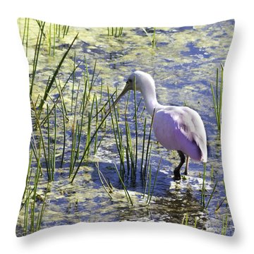 Roseate Spoonbill IIi Throw Pillow