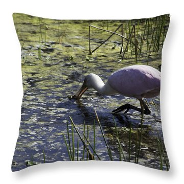 Roseate Spoonbill Ix Throw Pillow
