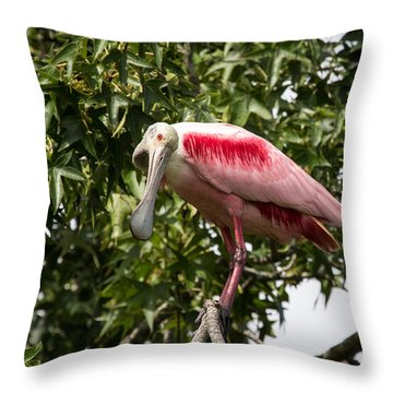 Throw Pillow featuring the photograph Roseate Spoonbill  What Are You Looking At 2 by Gregory Daley  PPSA