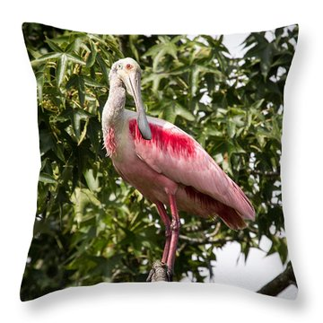 Roseate Spoonbill  What Are You Looking At Throw Pillow by Gregory Daley  PPSA