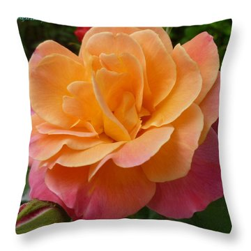 Throw Pillow featuring the photograph Rosemary And Thyme by Lingfai Leung