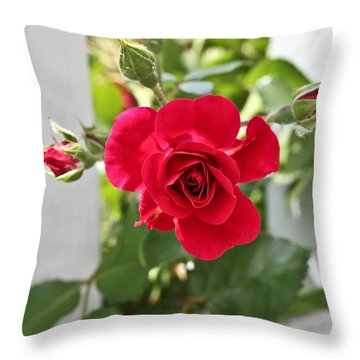 Throw Pillow featuring the photograph Roses Are Red by Joann Copeland-Paul