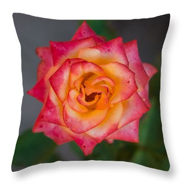 Roses From My Garden Throw Pillow