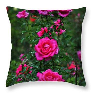 Rosebush Photographs Throw Pillows