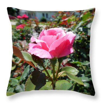 Roses Near A Country House Throw Pillow by Eloise Schneider