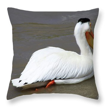 Rough Billed Pelican Throw Pillow by Alyce Taylor