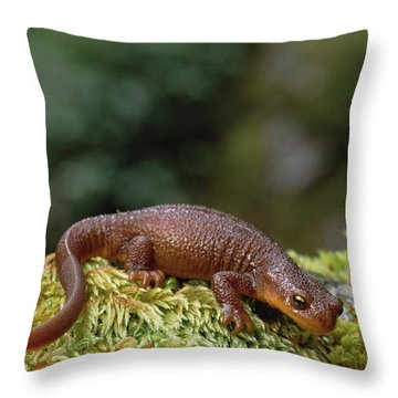 Rough-skinned Newt Oregon Throw Pillow by Gerry Ellis