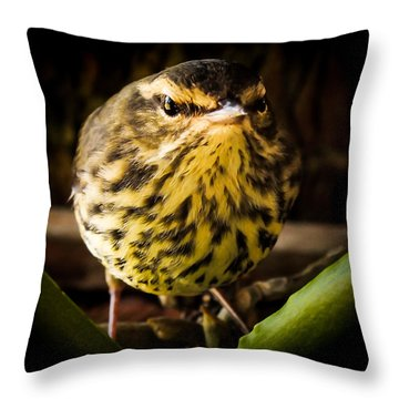 Round Warbler Throw Pillow