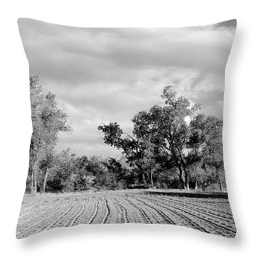 Rows Bw Throw Pillow
