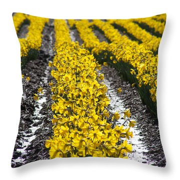 Rows Of Daffodils Throw Pillow