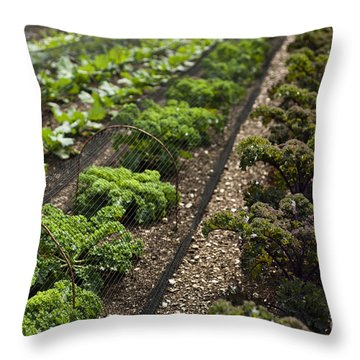 Rows Of Kale Throw Pillow by Anne Gilbert