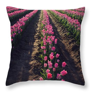 Throw Pillow featuring the photograph Rows Of Pink by Sylvia Cook