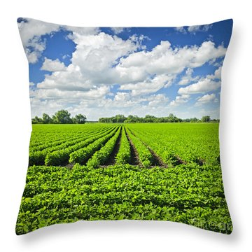 Rows Of Soy Plants In Field Throw Pillow