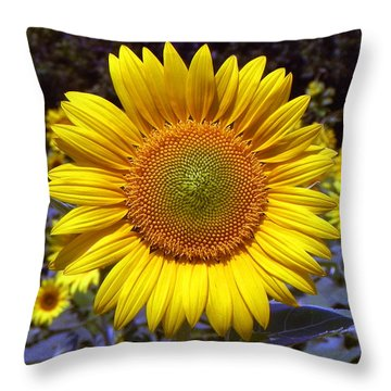 Throw Pillow featuring the photograph Roxanna Sunflower by Bill Swartwout