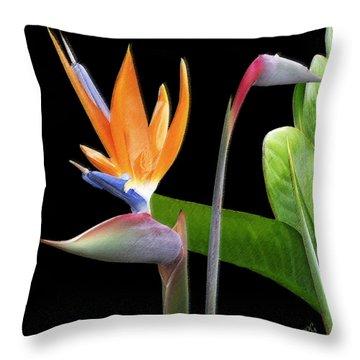 Royal Beauty II - Bird Of Paradise Throw Pillow