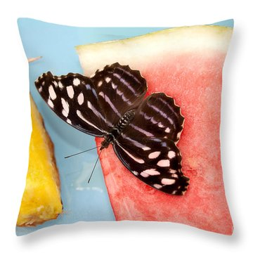 Throw Pillow featuring the photograph Royal Blue Butterfly by Eva Kaufman