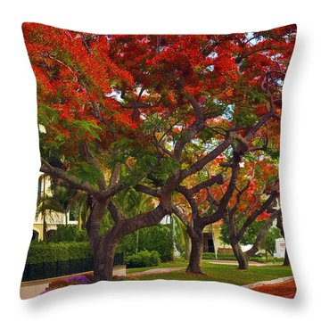 Royal Poinciana Trees Blooming In South Florida Throw Pillow
